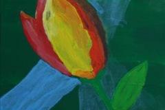 tulpea